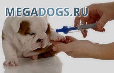 Вирусные заболевания у собак.