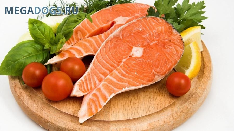 Можно ли кормить собаку рыбой?