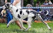 Движение собак