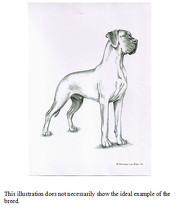 OFFICIAL GREAT DANE STANDARD