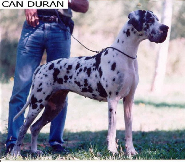 Zoe de Can Duran