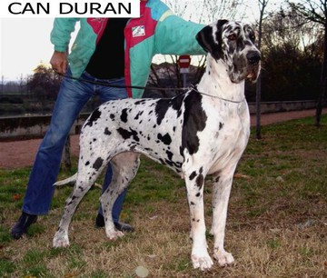 Anna De Can Duran