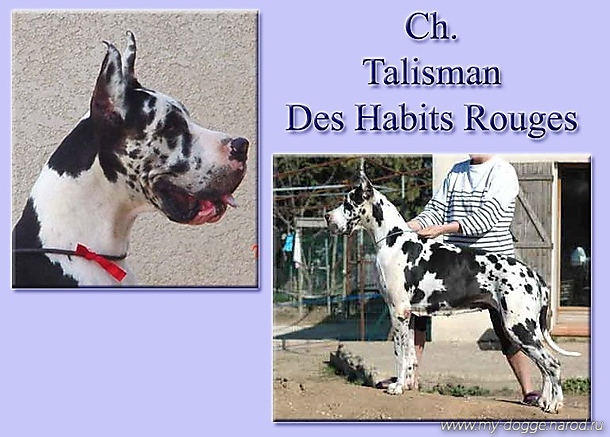 Talisman des Habits Rouges