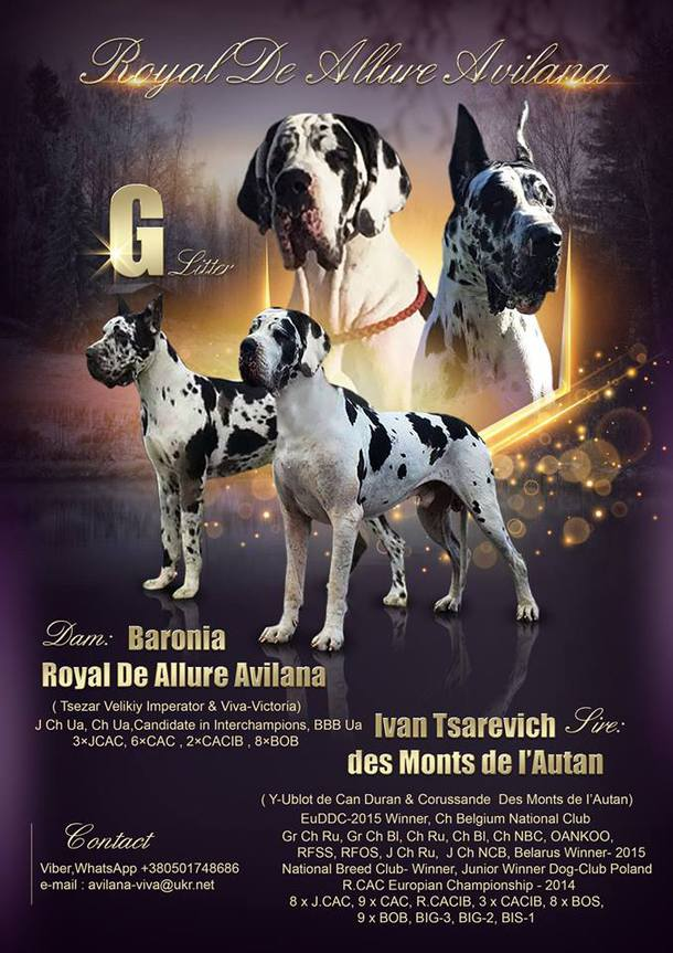 Puppies in the kennel Royal de Allure Avilana
